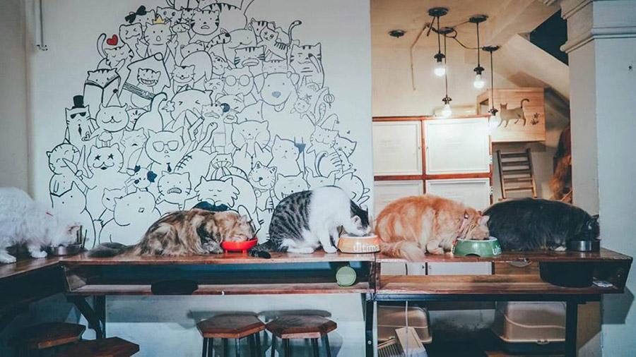 mô hình cafe thú cưng