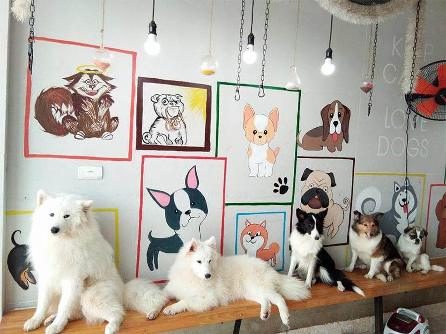 Cafe thú cưng